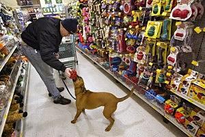 Petsmart Stores
