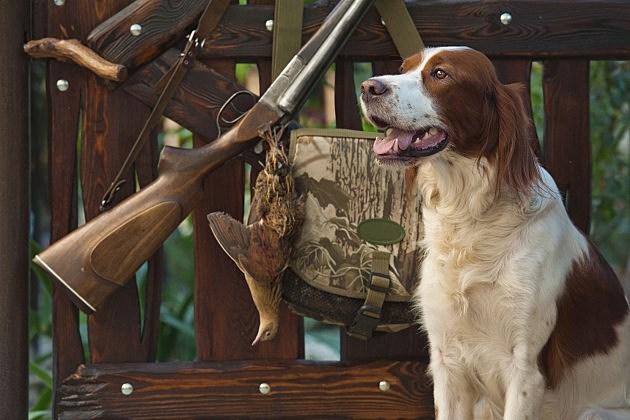 Dog and gun