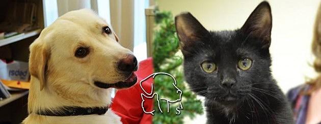 City of El Paso Animal Services Facebook