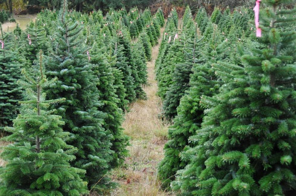 courtesy evan sharboneau - Cheap Real Christmas Trees For Sale