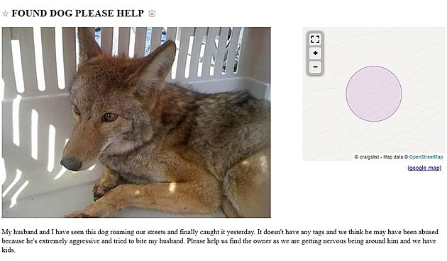 Coyote Pack in Western Mass? - Page 3