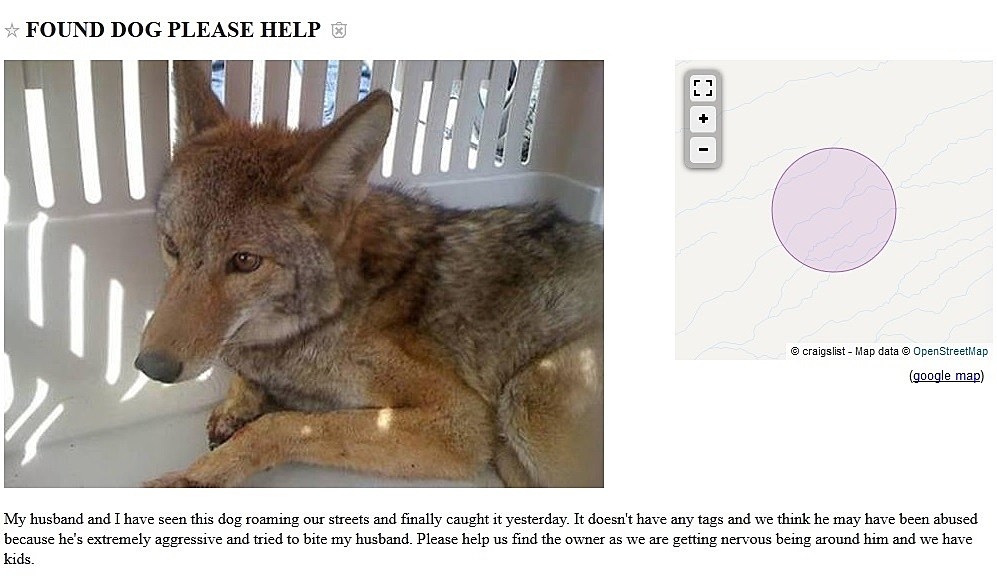 El Paso Craigslist Ad Seeks To Find Owner Of Found Dog, But Itu0027s Not A Dog  Craigslist El Paso