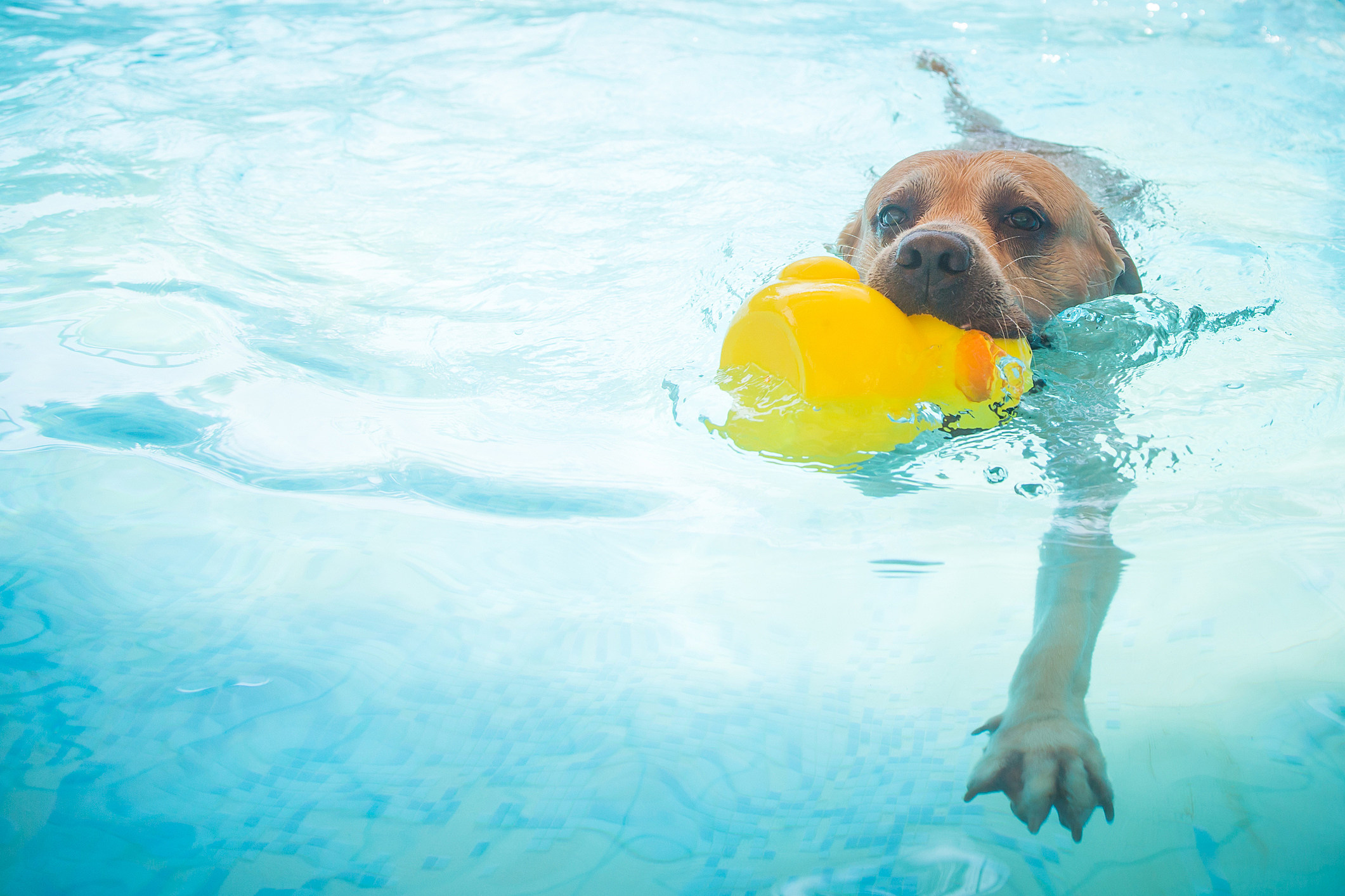 El Paso Parks and Rec \'Dog Day Swimming\' Party Set for September