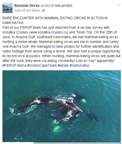 Russian Orcas via Facebook