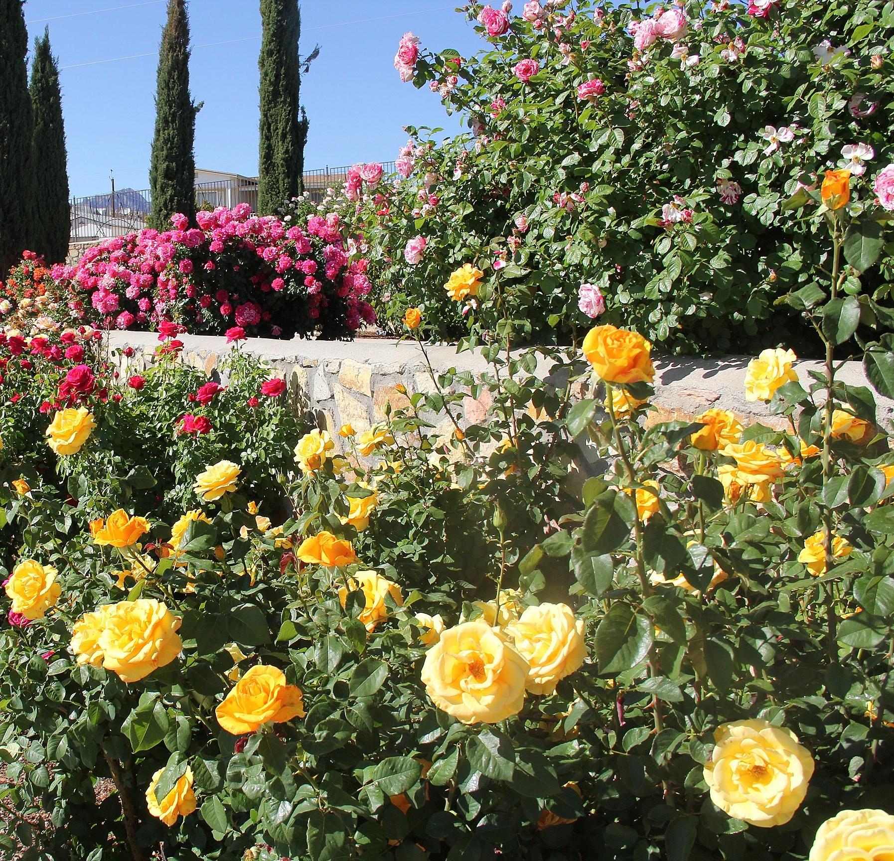 Rose Garden El Paso Tx Hours Garden Ftempo